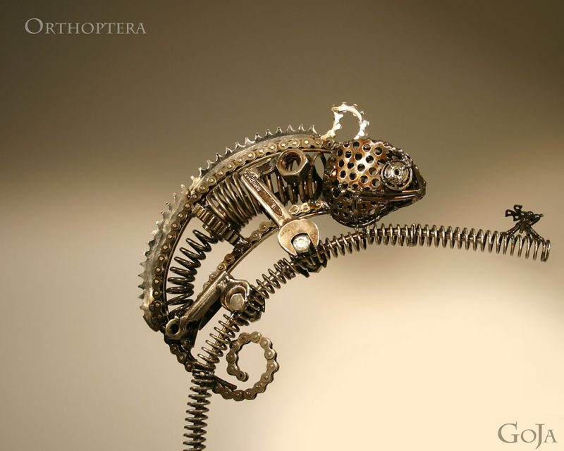 GoJa - Orthoptera